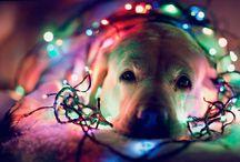 Christmas / by Leslie K