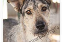 Perros en adopción PROA / Perretes que están esperando adopción en Madrid