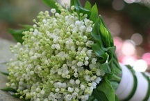 White purple mentha pistacia wedding - Lily of the valley
