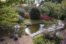 Jardin de Valerianes / Сады Валериан / Семейный французский сад, созданный с нуля 20 лет тому назад. Как у них только сил на все это хватило...  О пездке подробнее здесь: http://www.cecile.ru/index.php/about/64-poezdka-po-sadam-normandii-s-15-po-18-06-2017