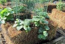Organic Gardening / by Corrie Norman