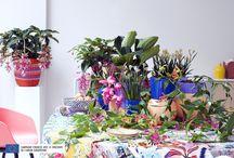 &Beautés Tropicales