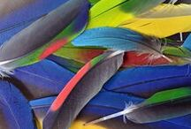 ××× PARROTS ...colorful spectacle ×××