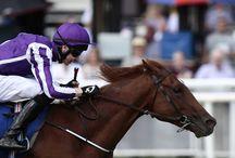 Australia - an amazing race horse!