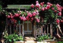 Garden... / by Lucinda Lawson