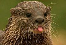 Otters <3
