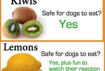 Dog safe foods