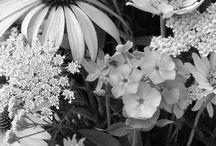 Photography | BLACK & WHITE