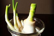 Regrowing veges
