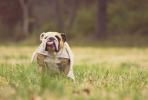 Funny and cute animals / by cheri ellis