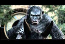 @# Voir La Planète des singes l'affrontement Streaming Film en Entier VF Gratuit