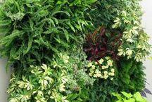 puutarhajuttuja