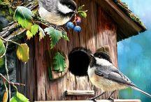 Pássaros, Birds