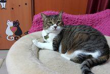 Kedim Minnoş