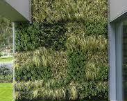 Inspiration green walls / vertical gardens