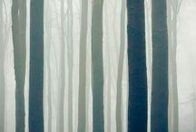수채화 나무