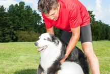Dogs Training and Tips