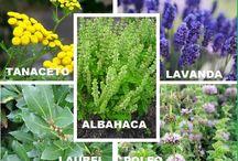Plantas que repelen