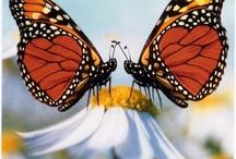 Flutterflies / by Rebecca Leftwich