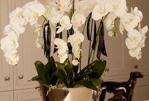 Orchid Arrangements - Ideas