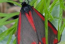 Papillons / Les papillons observés dans mon Jardin - 2018