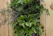 vertical gardens / by Anita Comarata