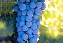 vinuri si rachiuri naturale