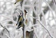 Природа. Зима.