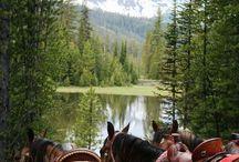 Horses. .