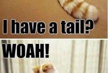 Zvířecí humor