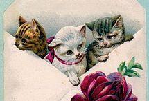 Koty kotki