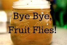 Cleaning: Fruit Flies