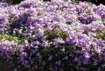 Blomster / Bilder av blomster på reiser i Norge og i utlandet. I tillegg også bilder andre har tatt.