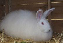 Farming Rabbits
