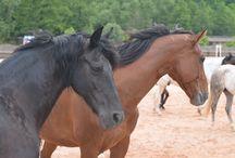 """Kraina Koni / Kraina Koni - nauka jazdy konno dla dzieci, dorosłych, rajdy konne, """"oprowadzanki"""" dla dzieci, jazda w terenie."""
