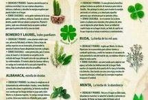 usos plantas