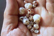 Bones & Skeletons