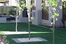 Backyard design / Landscaping Ideas