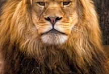 Magnificent Mammals