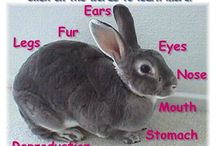 Rabbit home education!