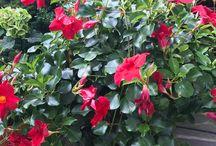 Gartenpflanzen überwintern