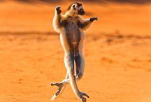 Madagascar / by eDreams International