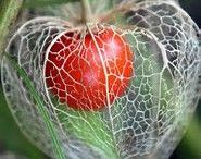 A Seed & A Berry & A FRUIT & A Nut    植物の実