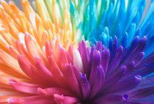 ♡ Color Inspiration ♡