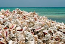 Island life / Scenes of the rock & sand fringed escape called Bonaire