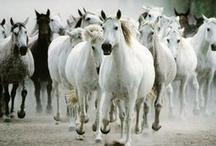 Wild Horses / by Everett Faulkner