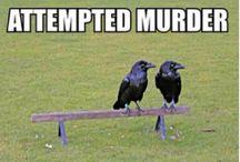 Ha ha funny stuff