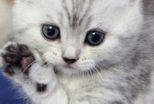 Cats / Здесь вы можете найти много домашних пушистиков