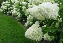 Elegant white garden