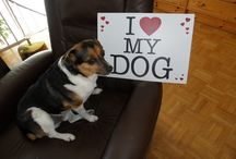 Kijken: Hond, trouwe vriend.....